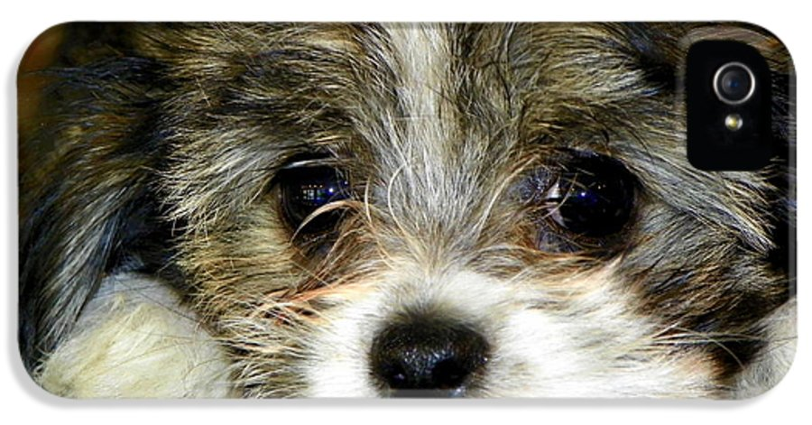 Puppies IPhone 5 Case featuring the photograph Eyes On You by Karen Wiles