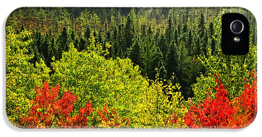Autumn IPhone 5 Case featuring the photograph Fall Forest Rain Storm by Elena Elisseeva