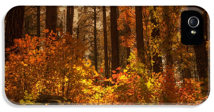 Fall IPhone 5 Case featuring the photograph Fall Forest by Saija Lehtonen