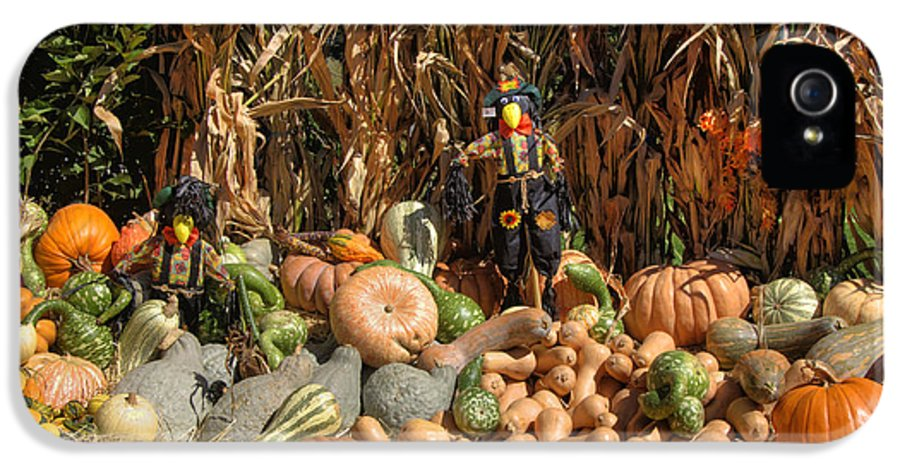 Corn Stalks IPhone 5 / 5s Case featuring the photograph Fall Harvest by Joann Vitali
