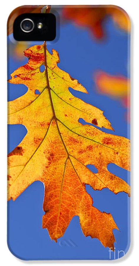 Autumn IPhone 5 Case featuring the photograph Fall Oak Leaf by Elena Elisseeva