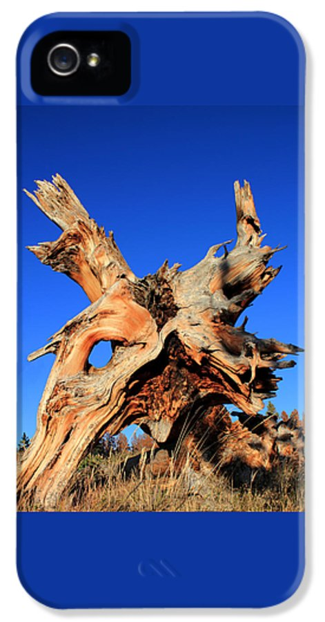 Tree Roots IPhone 5 Case featuring the photograph Fallen by Shane Bechler