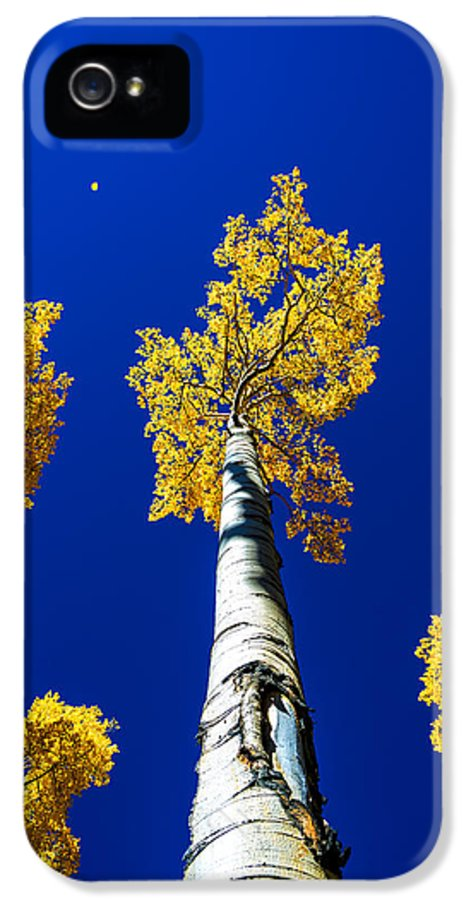 Falling Leaf IPhone 5 Case featuring the photograph Falling Leaf by Chad Dutson