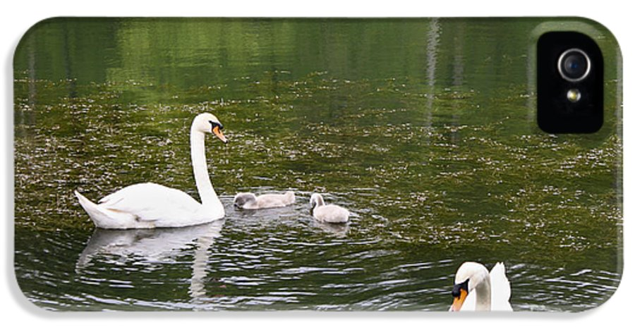 Swan IPhone 5 Case featuring the photograph Family Of Swans by Teresa Mucha