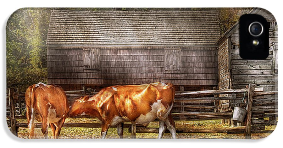 Savad IPhone 5 Case featuring the photograph Farm - Cow - A Couple Of Cows by Mike Savad