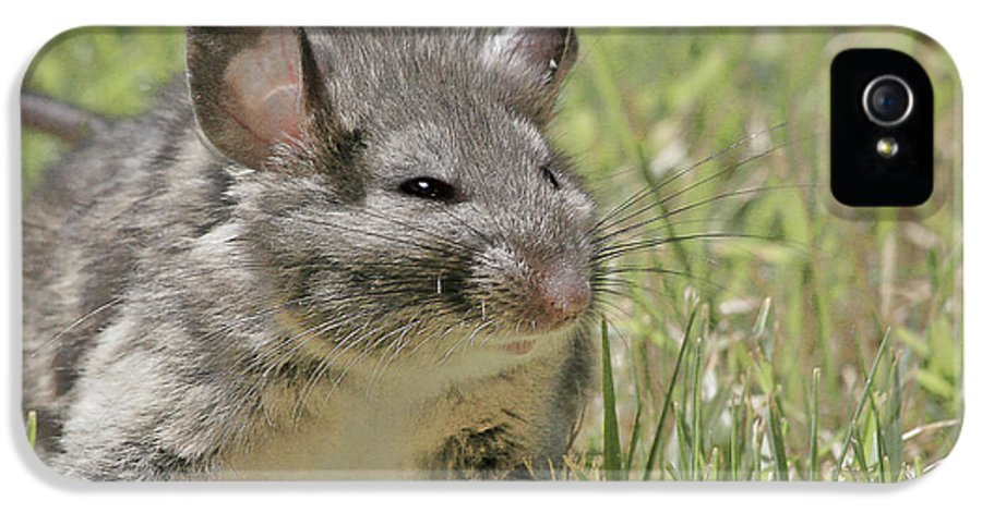Norway Rat IPhone 5 Case featuring the photograph Fat Norway Rat by Christine Till