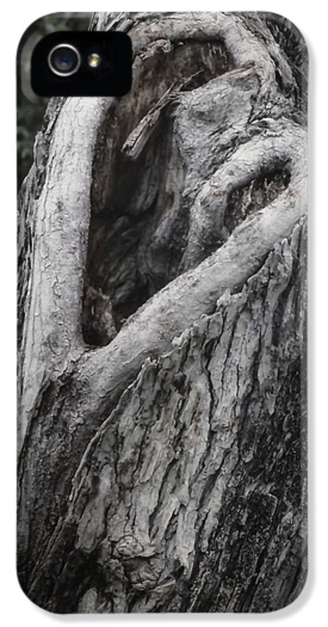 Arbor IPhone 5 Case featuring the photograph Finding Love by Joan Carroll