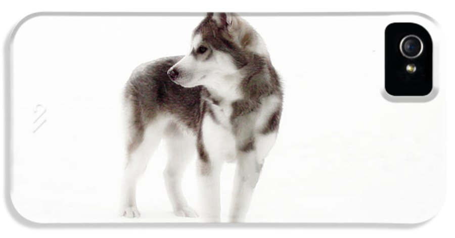 Wolf Photography Dave Pucciarelli IPhone 5 Case featuring the photograph First Winter by Iconic Images Art Gallery David Pucciarelli