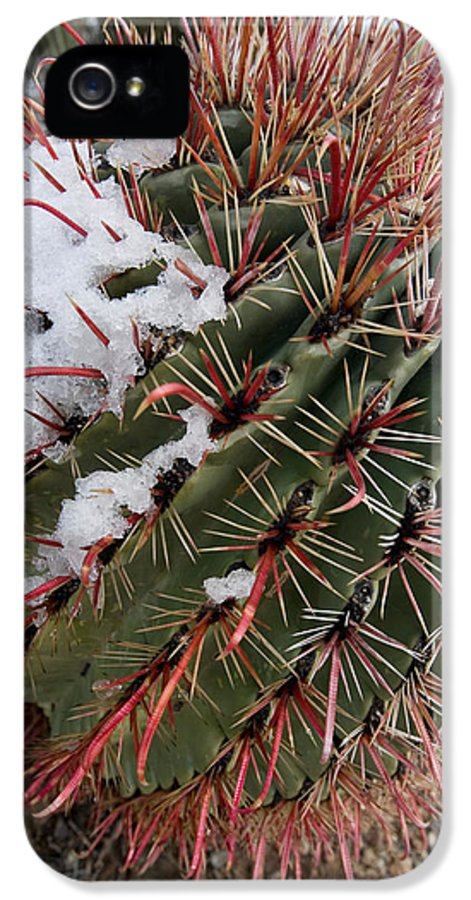 Fishhook IPhone 5 Case featuring the photograph Fish Hook Barrel Cactus With Snow by Susan Degginger