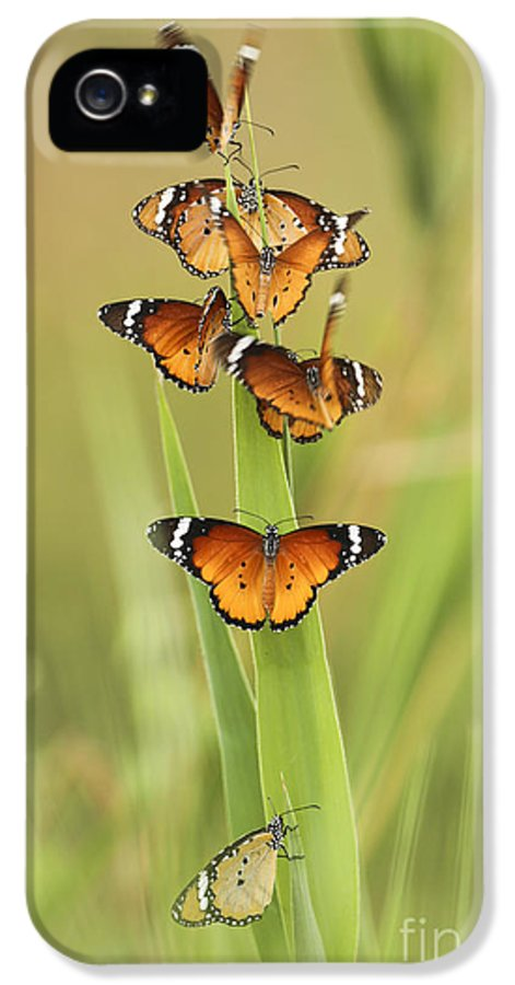 Plain Tiger IPhone 5 Case featuring the photograph Flock Of Plain Tiger Danaus Chrysippus by Alon Meir