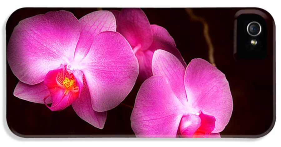 Orchid IPhone 5 Case featuring the photograph Flower - Orchid - Better In A Set by Mike Savad
