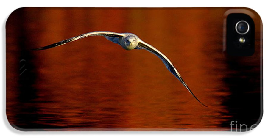 Wildlife IPhone 5 Case featuring the photograph Flying Gull On Fall Color by Robert Frederick