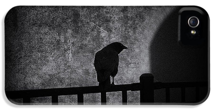 Crow IPhone 5 Case featuring the photograph Follow by Bob Orsillo