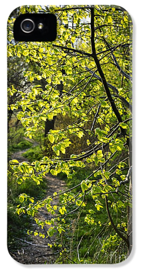 Forest IPhone 5 Case featuring the photograph Forest Path by Elena Elisseeva