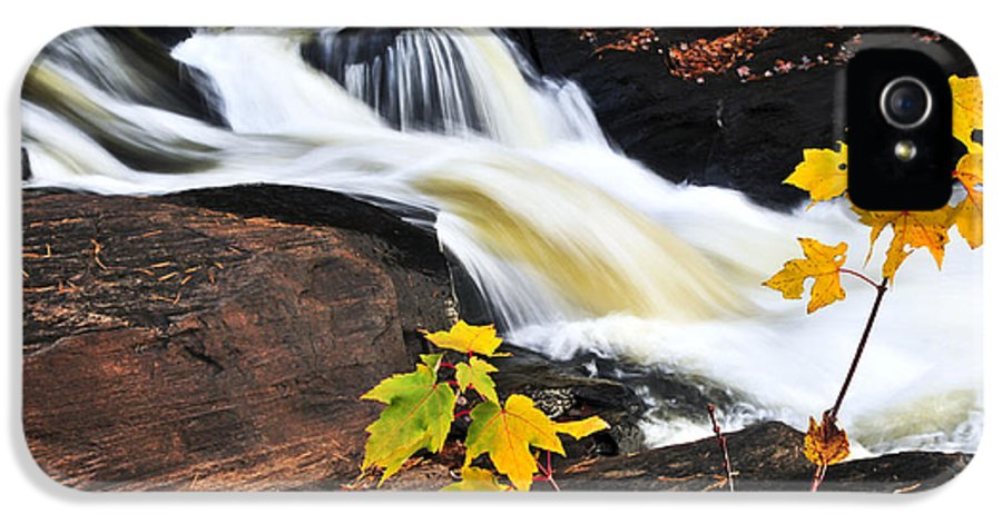 Autumn IPhone 5 Case featuring the photograph Forest River In The Fall by Elena Elisseeva