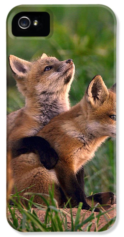 Fox IPhone 5 Case featuring the photograph Fox Cub Buddies by William Jobes
