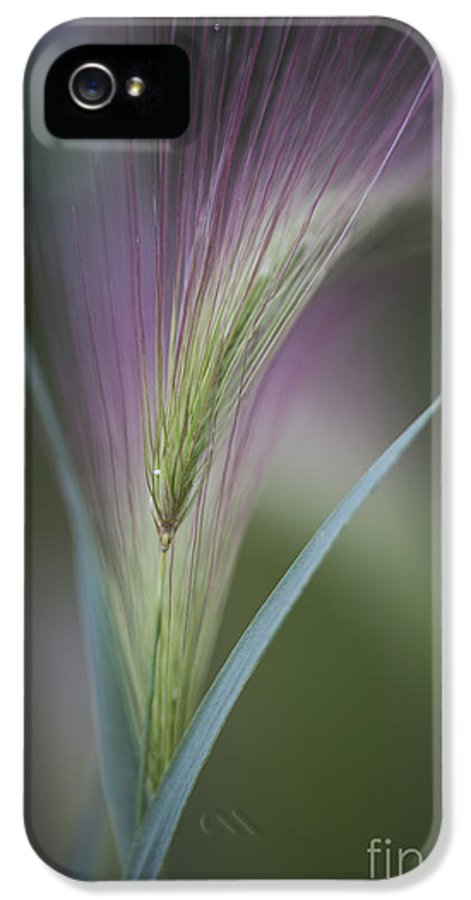 Foxtail IPhone 5 Case featuring the photograph Foxtail Barley by Priska Wettstein
