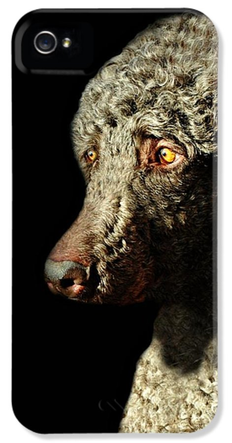 Dog IPhone 5 Case featuring the photograph French Poodle Standard by Diana Angstadt