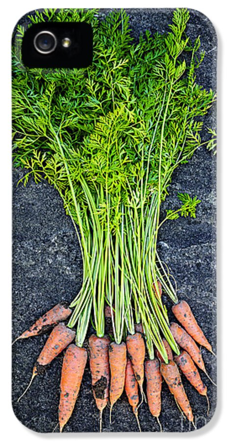 Carrots IPhone 5 Case featuring the photograph Fresh Carrots From Garden by Elena Elisseeva