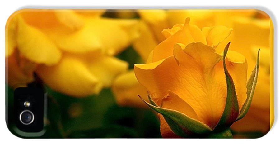 Rose IPhone 5 Case featuring the photograph Friendship Roses by Rona Black