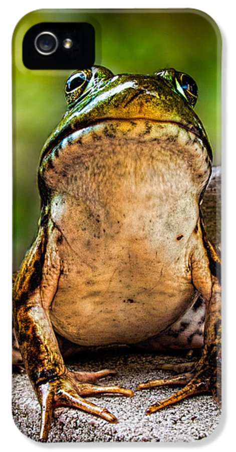 Frog IPhone 5 Case featuring the photograph Frog Prince Or So He Thinks by Bob Orsillo