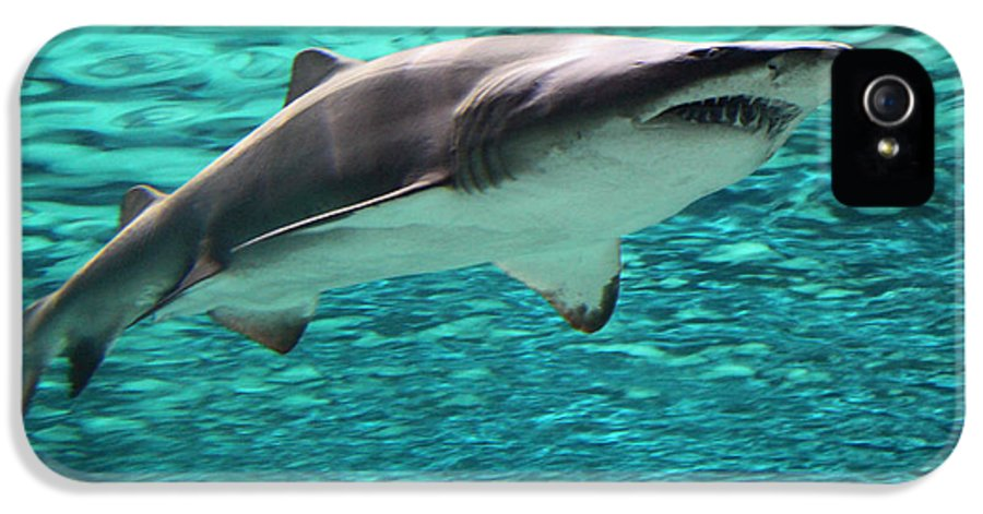 Shark IPhone 5 Case featuring the photograph From The Deep II by Suzanne Gaff