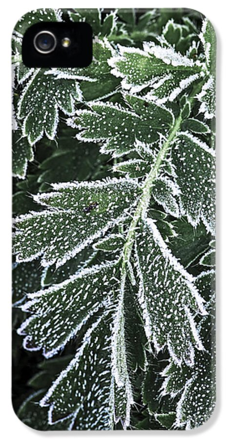 Frost IPhone 5 Case featuring the photograph Frosty Leaves Macro by Elena Elisseeva