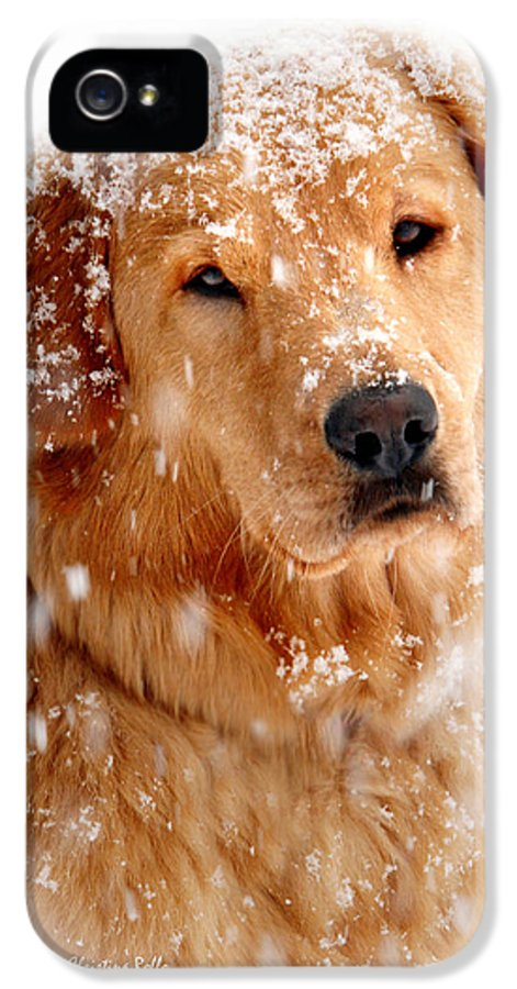 Frosty Mug IPhone 5 Case featuring the photograph Frosty Mug by Christina Rollo