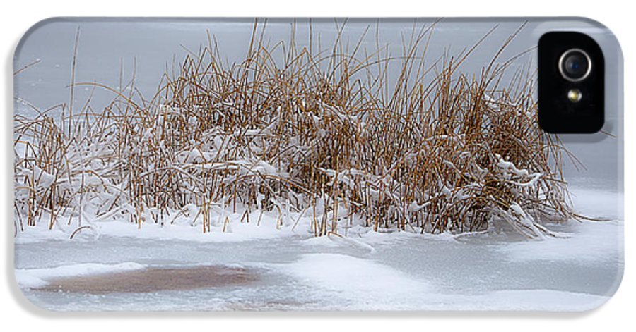 Snow Scene IPhone 5 Case featuring the photograph Frozen Reeds by Julie Palencia