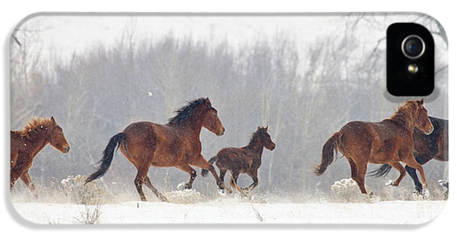 Mustangs IPhone 5 Case featuring the photograph Frozen Track by Mike Dawson