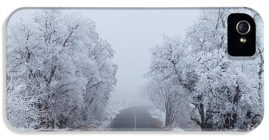 Ice IPhone 5 Case featuring the photograph Frozen Trees by Darren White