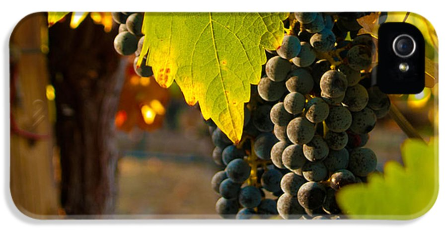 Grape IPhone 5 Case featuring the photograph Fruit Of The Vine by Bill Gallagher