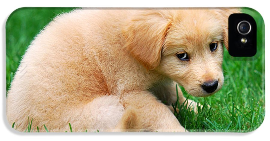 Puppy IPhone 5 Case featuring the photograph Fuzzy Golden Puppy by Christina Rollo