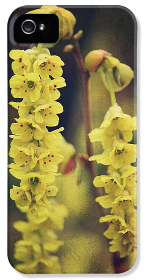 Flowers IPhone 5 Case featuring the photograph Gently Falling by Laurie Search