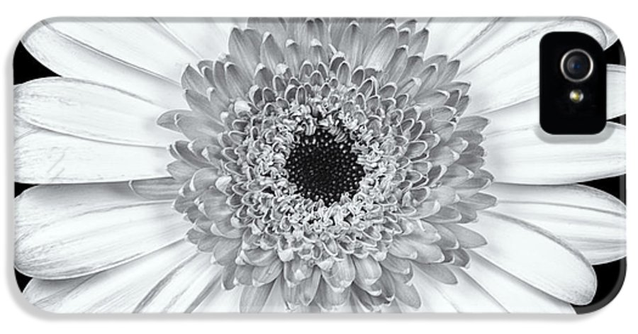 3scape Photos IPhone 5 Case featuring the photograph Gerbera Daisy Monochrome by Adam Romanowicz