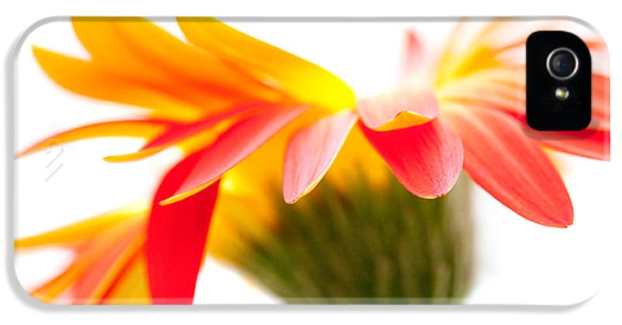 Flower IPhone 5 Case featuring the photograph Gerbera Mix Crazy Flower - Orange Yellow by Natalie Kinnear