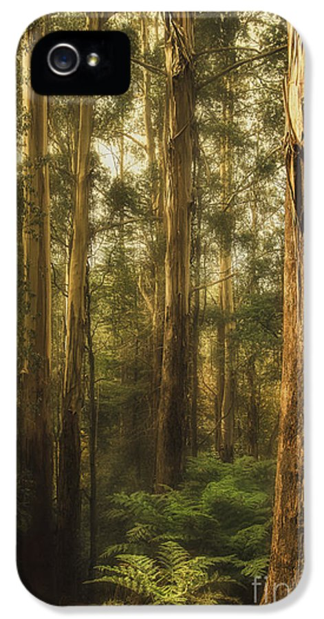 Gum IPhone 5 Case featuring the photograph Ghostly by Andrew Paranavitana