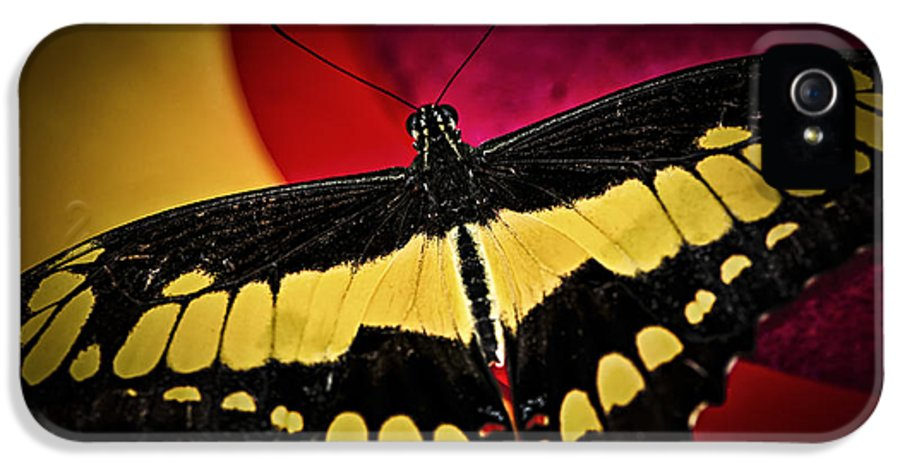 Giant IPhone 5 Case featuring the photograph Giant Swallowtail Butterfly by Elena Elisseeva