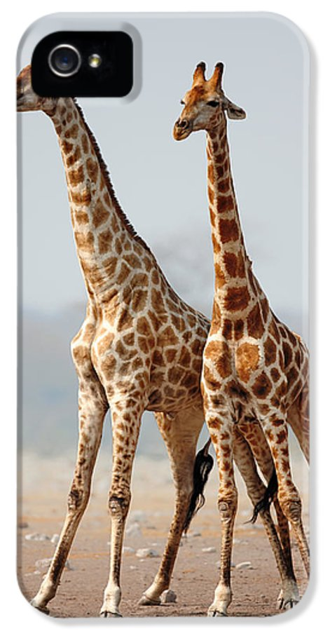 Giraffes IPhone 5 Case featuring the photograph Giraffes Standing Together by Johan Swanepoel