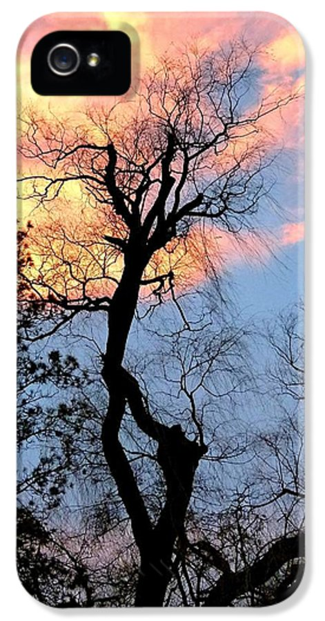 Gnarled Tree Silhouette IPhone 5 Case featuring the photograph Gnarled Tree Silhouette by Will Borden