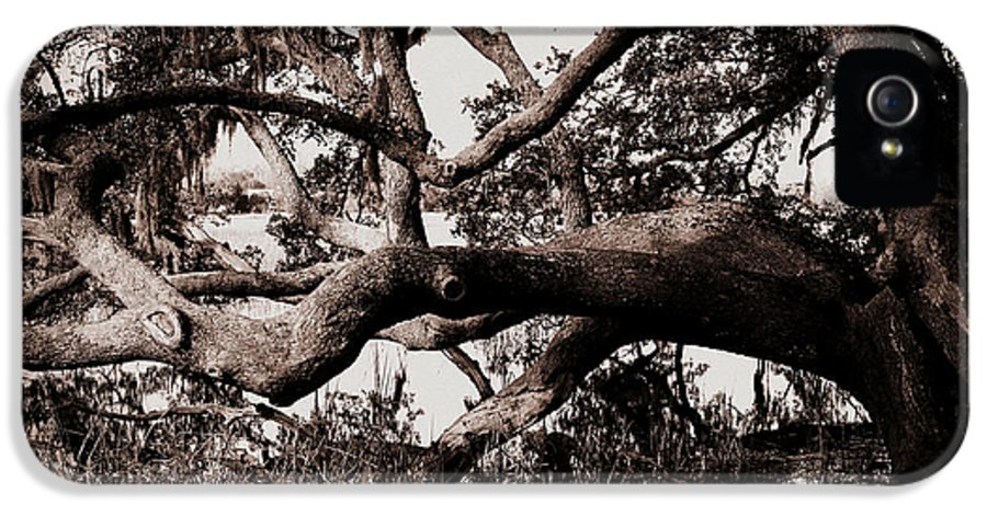 Gnarly Limbs At The Ashley River In Charleston IPhone 5 Case featuring the photograph Gnarly Limbs At The Ashley River In Charleston by Susanne Van Hulst