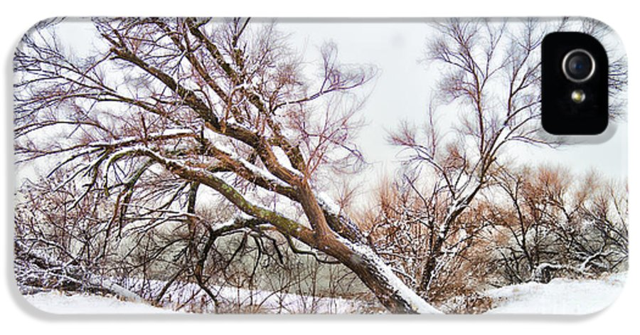 Snow IPhone 5 Case featuring the photograph Going Softly Into Winter by Betty LaRue