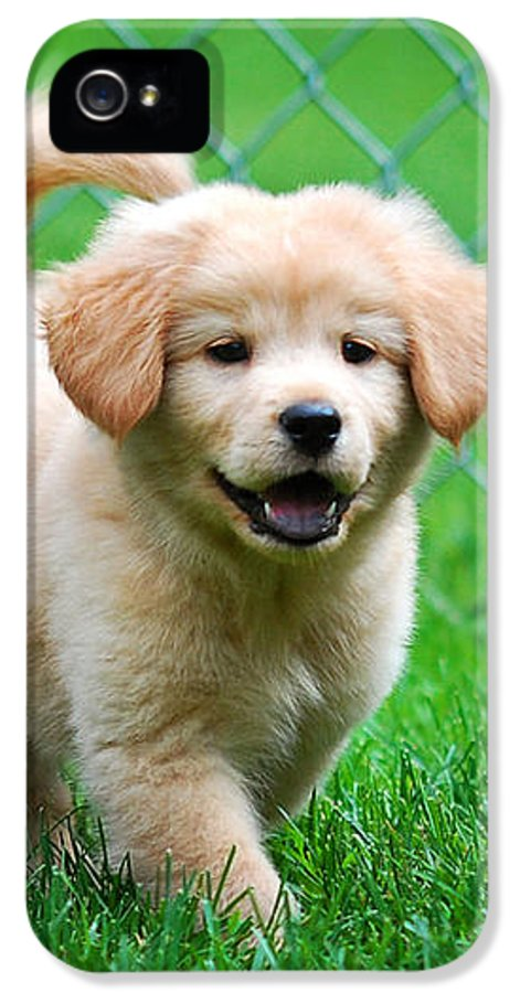 Golden Retriever IPhone 5 Case featuring the photograph Golden Retriever Puppy by Christina Rollo