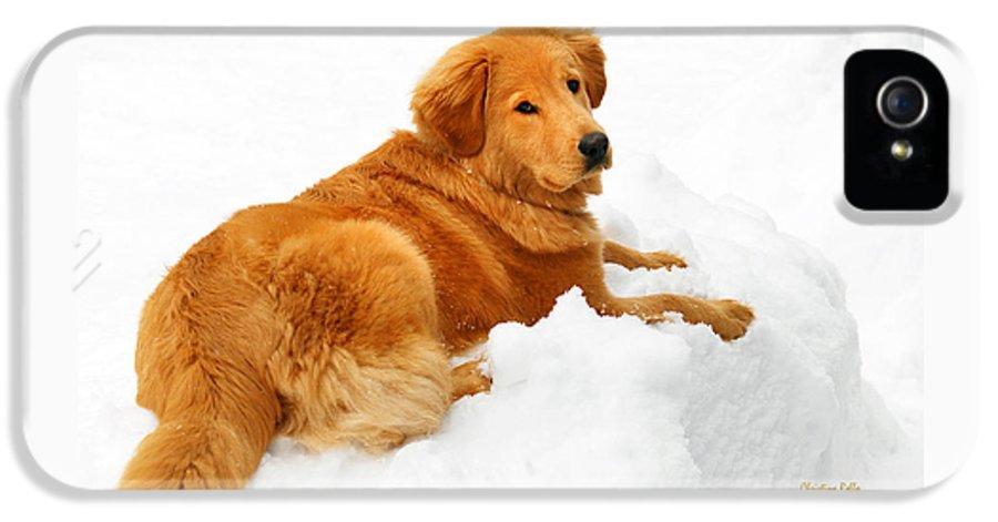 Golden Retriever IPhone 5 Case featuring the photograph Golden Retriever Snowball by Christina Rollo