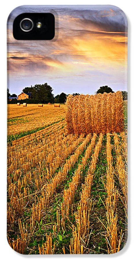 Farm IPhone 5 Case featuring the photograph Golden Sunset Over Farm Field In Ontario by Elena Elisseeva