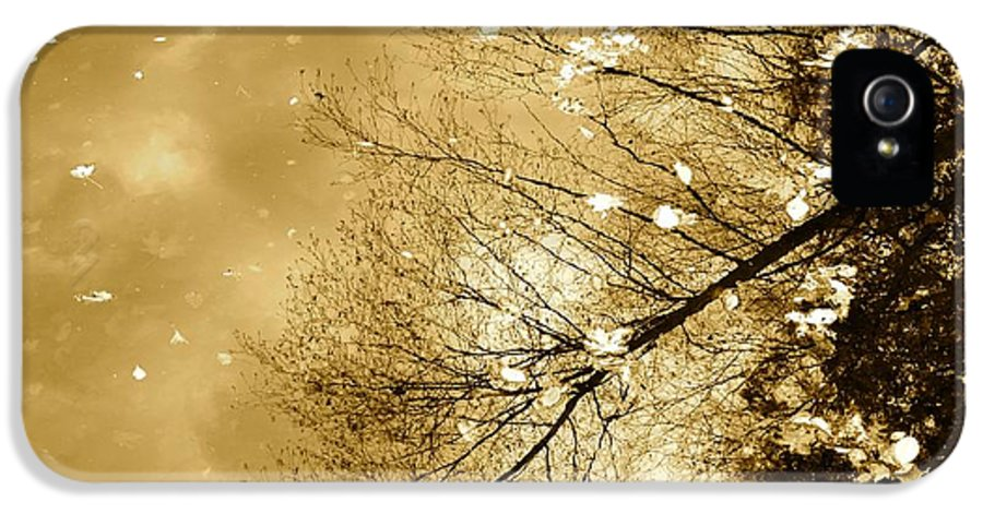 Autumn IPhone 5 Case featuring the photograph Golden Tones by Corinne Rhode