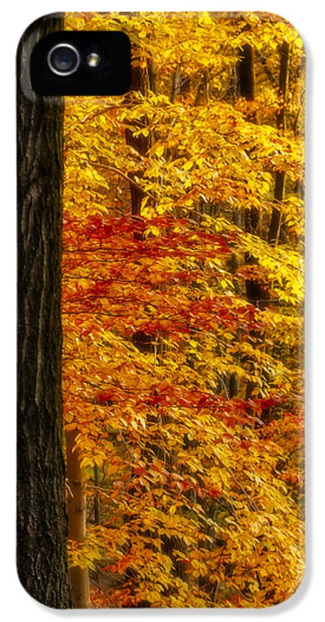 Autumn IPhone 5 Case featuring the photograph Golden Trees Glowing by Susan Candelario