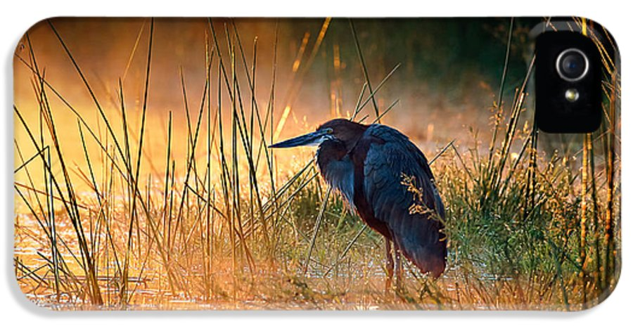 Heron IPhone 5 Case featuring the photograph Goliath Heron With Sunrise Over Misty River by Johan Swanepoel
