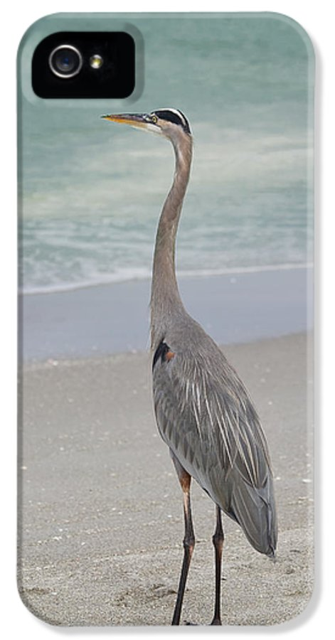 Great Blue Heron IPhone 5 Case featuring the photograph Great Blue Heron by Kim Hojnacki