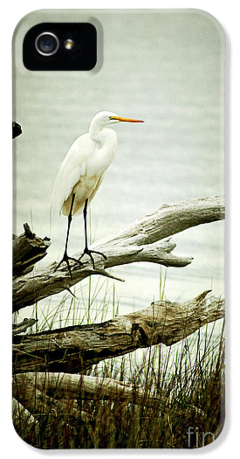 Bird IPhone 5 Case featuring the photograph Great Egret On A Fallen Tree by Joan McCool